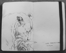 Sketchbook page from the Natural history museum // pencil on paper